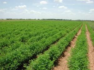 terreno-agricolo